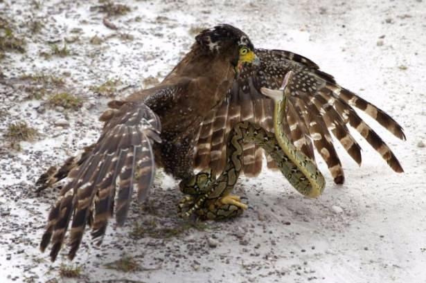 Vahşi doğadan sıradışı olaylar